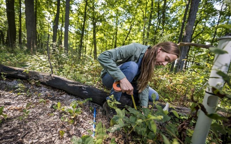 Tree Conservation Programs